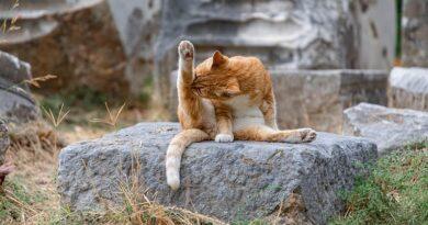 YogaKatze
